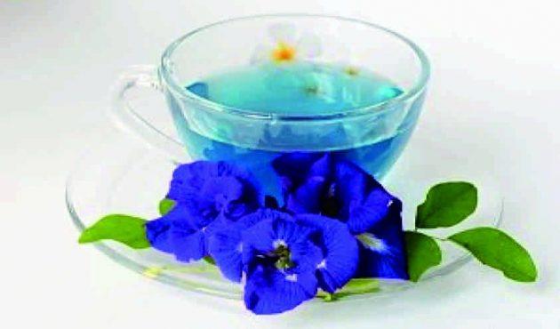 Bunga telang atau kembang telang (Clitoria ternatea)